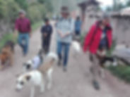 Peru-rescue-centre-dog-walk.jpg