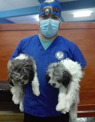 Peru-rescue-centre-sterilization-campaig