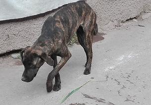 Peru-rescue-centre-street-dog-1.jpg
