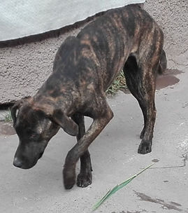 Peru-rescue-centre-street-dog-1.jpg