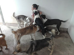 Peru-rescue-centre-rescued-dogs-with-vol