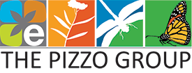 pizzo_group.png