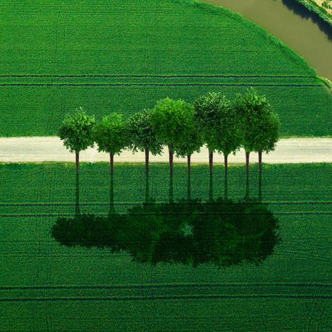 HNK_tree-4.jpg