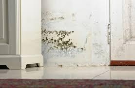 Tips para eliminar el moho en tu hogar