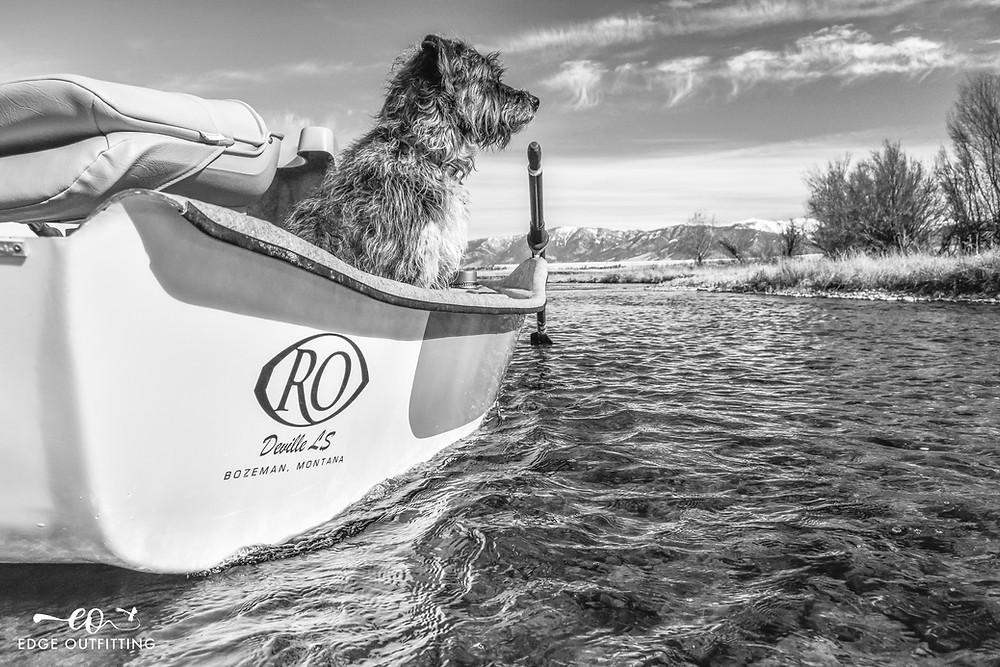 Fishing dog in a drift boat.