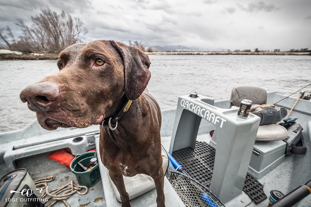 Fishing dogs.