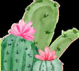 kaktusz_edited.png