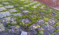 A bit mossy