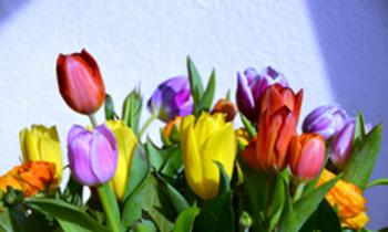 Rainbow Tulips.png
