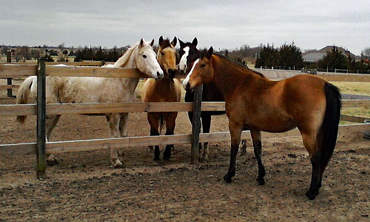 Our Four Horses.jpg
