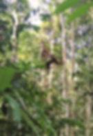 male-orangutan-trekking-glnp.jpg