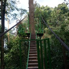 canopy-trail-steps-440x248.jpg