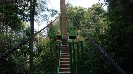 canopy-trail-steps-440x248.jpg