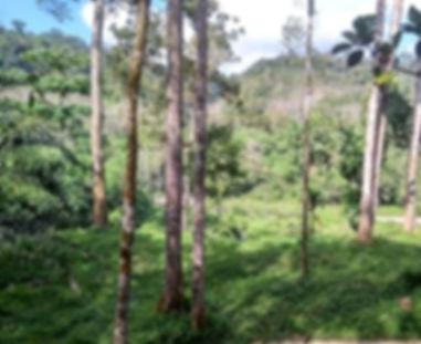 view-from-plantation-landak-river_edited