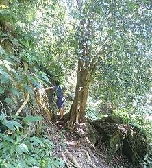 karst forest batu katak.JPG