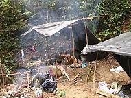 Jungle-camp-6days-trek.jpg