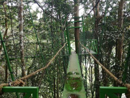 canopy trail.jpg