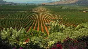 Wine in Baja