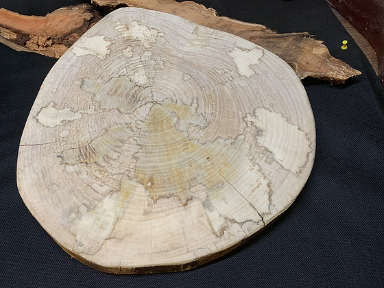 Spalted Sycamore Disc 39mm x 36mm x 20mm