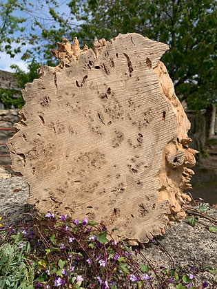 Burr Oak 260mm x 230mm x 35mm