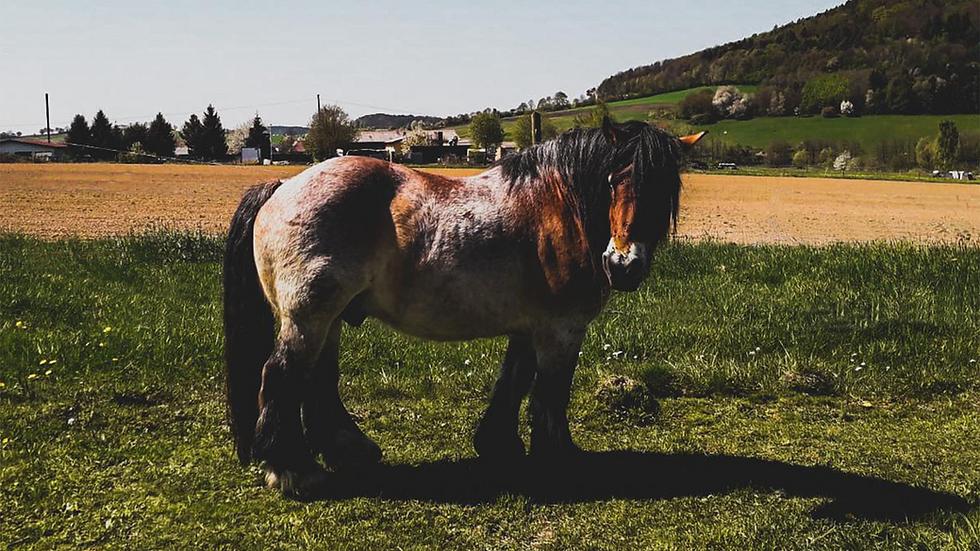 Pferd auf Weide.png