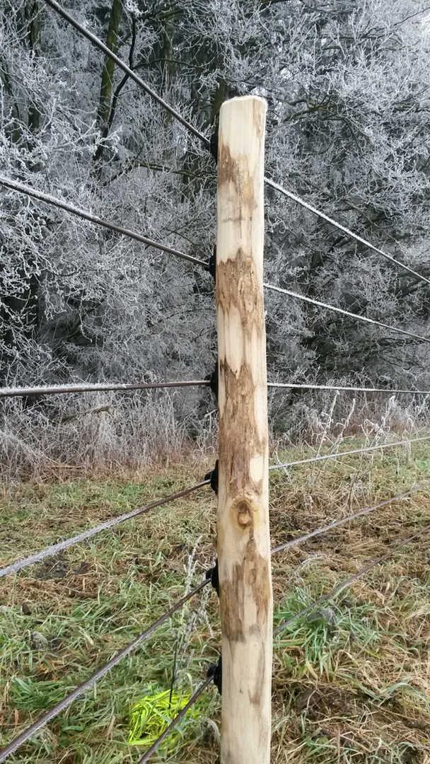 Wolfszaun im Winter für Pferde