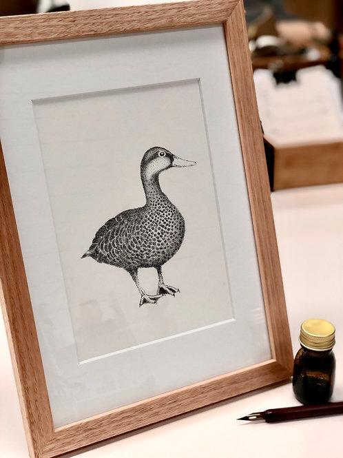 Framed Original Drawing - Duck