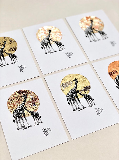 A6 Giraffes