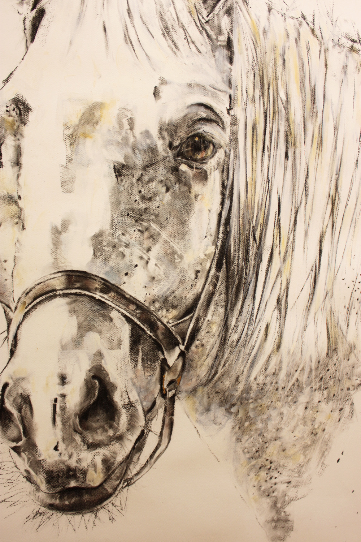 detail Free Horse 2017