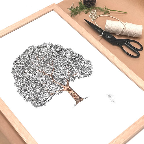 A3 T.Oak Frame Tree