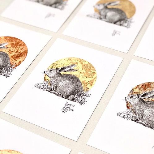 Rabbit A6