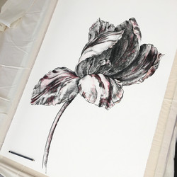 Red Tulip Study