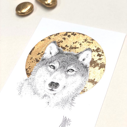 Wolf A6 A5