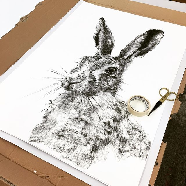 Hare Today. Gosford Art Prize 2016