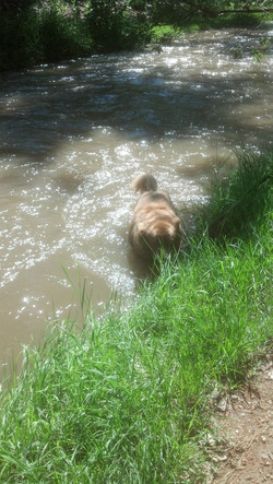 Cocoa cooling off