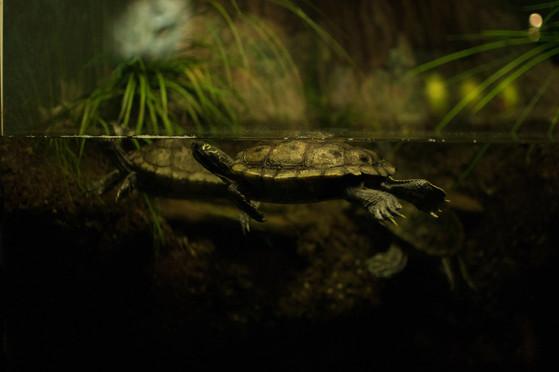 Turtle Photography