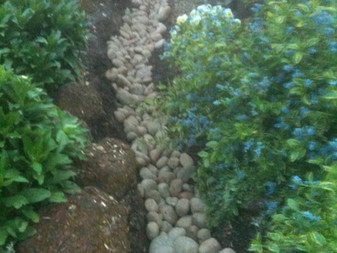 Sloping Rain Garden Below Bridge