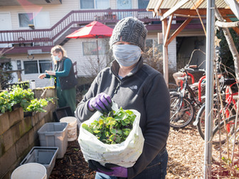 Brussels Sprouts Leaves Late Winter Bounty