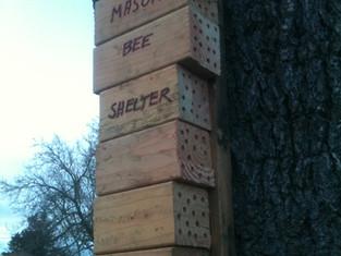 Mason Bee Shelter