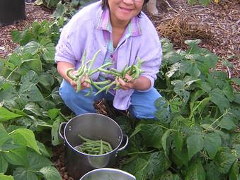 Maitri Picking Green Beens