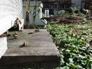 Pollinators and gardens