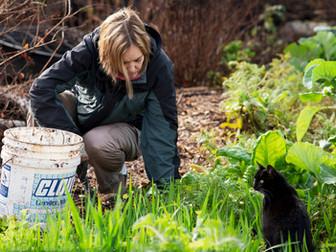 Weeding with Bootsie