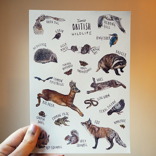 Iconic British Wildlife sticker sheet