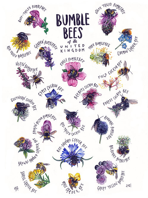 Bumblebees of the UK - A3 print
