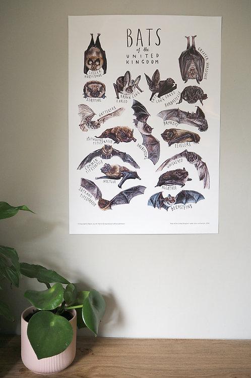 Bat A2 wall poster
