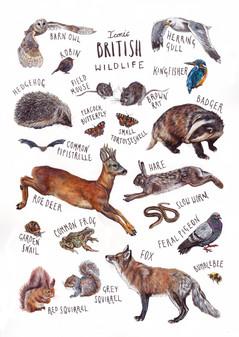 Iconic british wildlife v2.jpg