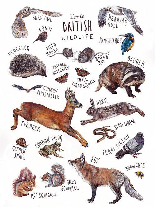 Iconic British Wildlife - print