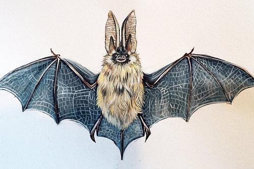 Long eared bat print