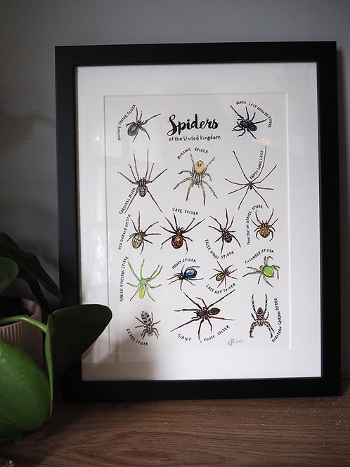 Spiders of the United Kingdom - original painting