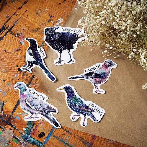 Single bird stickers